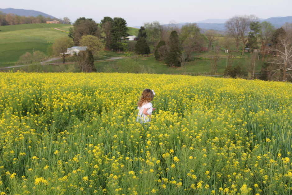 Fields of yellow flowers whitney erickwhitney erick does such a great job with the kids at one point she was holding her camera in one hand and ericks phone in the other with a video playing to get mightylinksfo Images