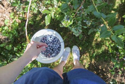Bluberry Bucket
